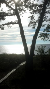 tree path2